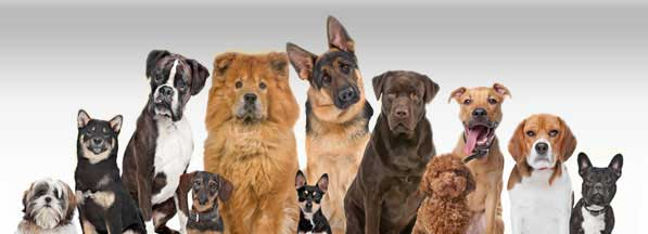 Online Pet Shops for Buy-Sell Birds Dogs Puppies Rabbit Cats in