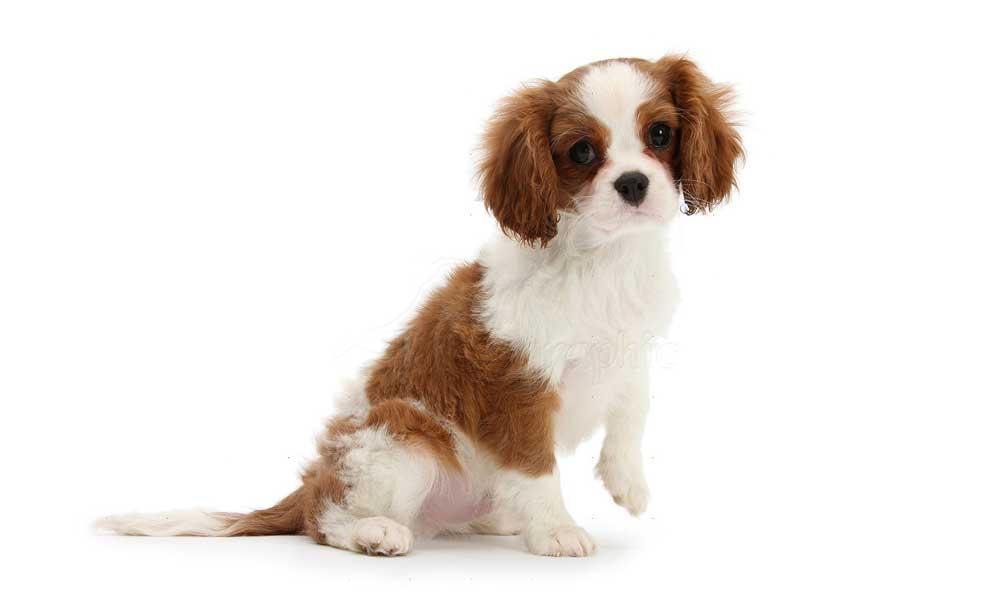 Adopt Utah Dogs