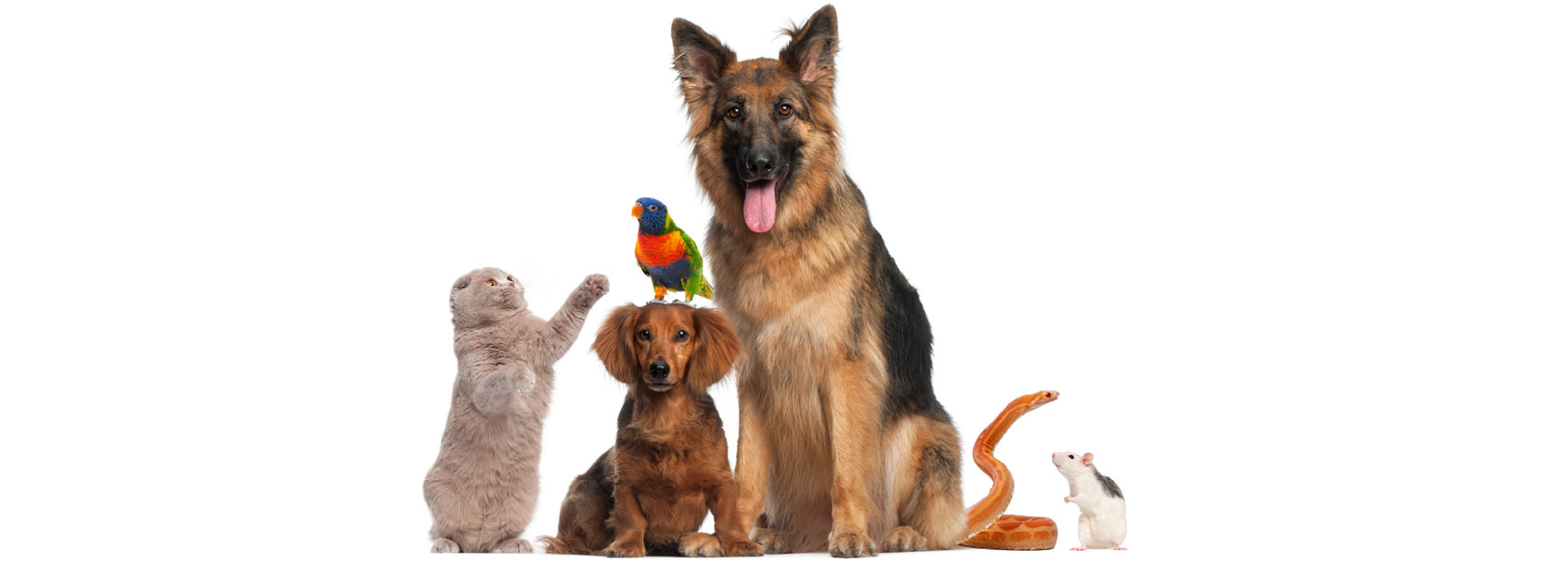 Online Pet Shops for Buy-Sell Birds Dogs Puppies Rabbit ...