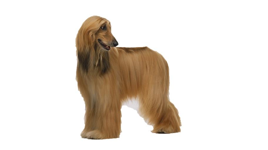 Dog Breeds | Dog Price List | Dog Bazar