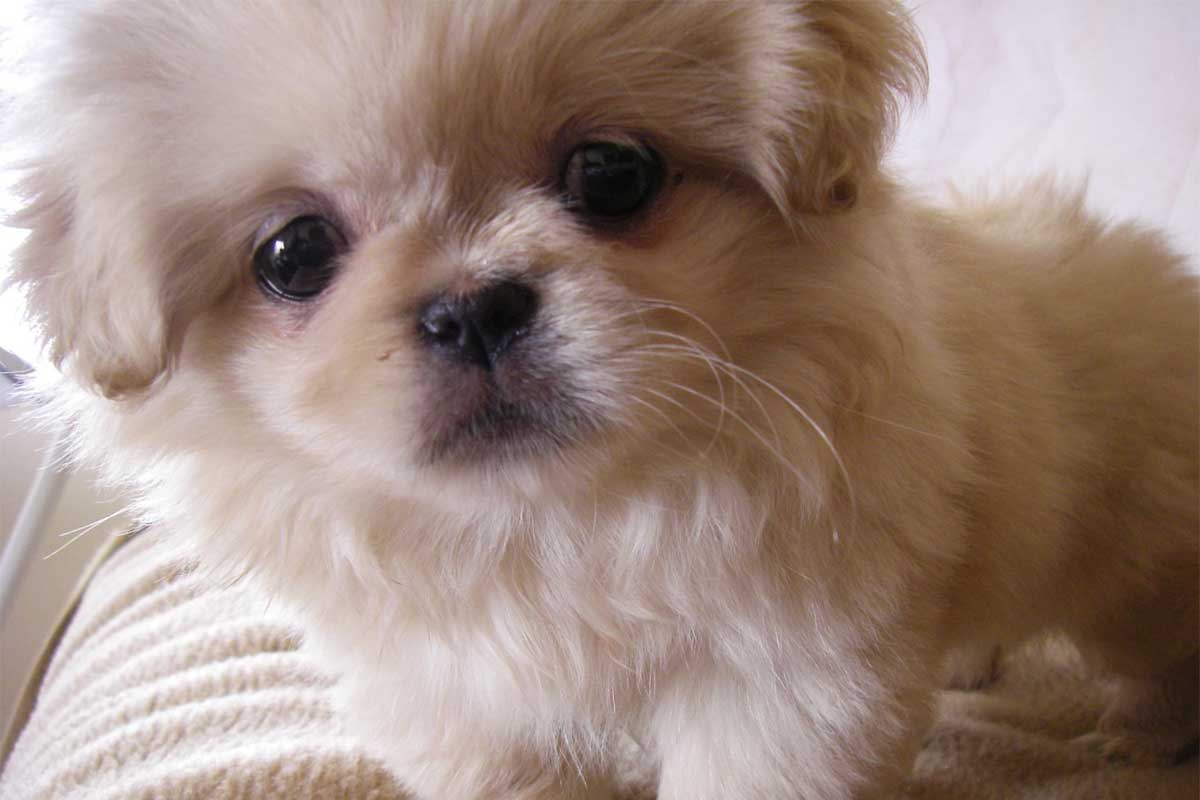 Small Female Dogs For Sale