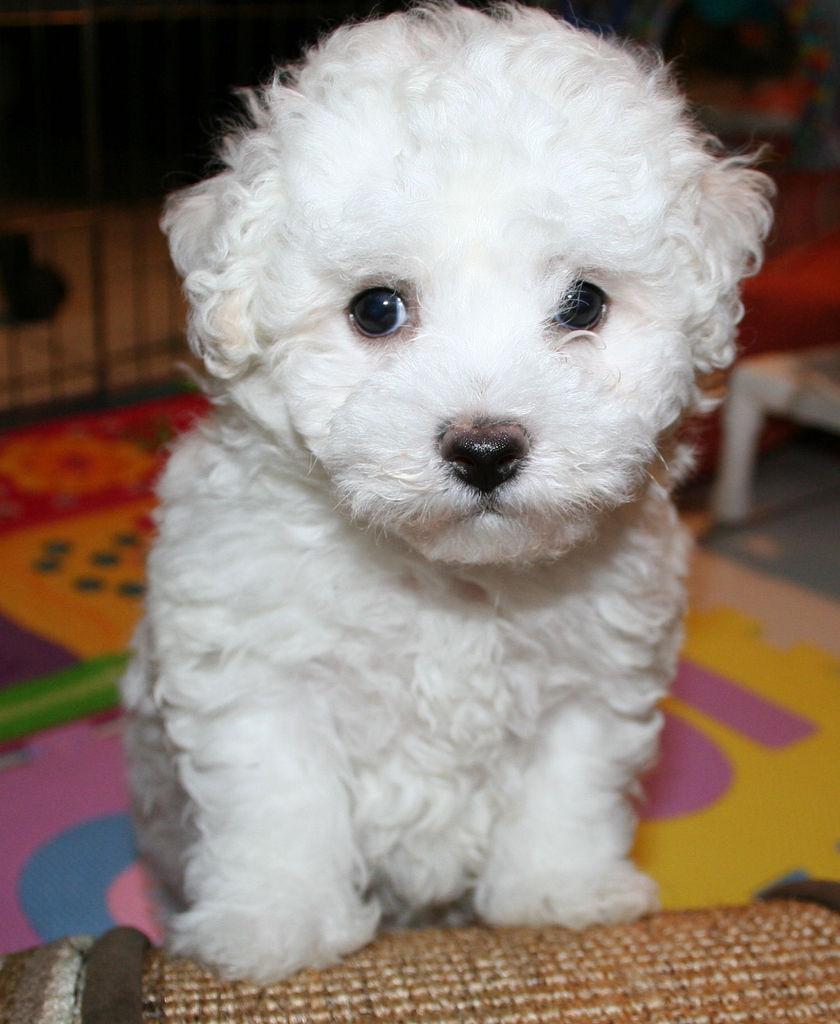 Dog Kennels West Lothian Cost