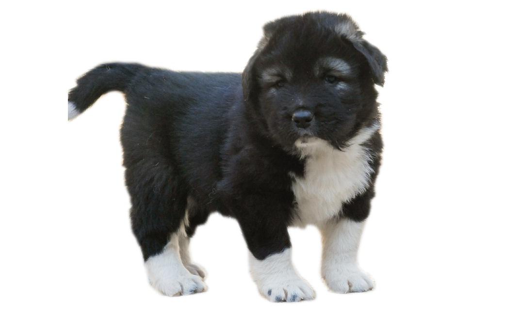 Dog | Dog Bazar