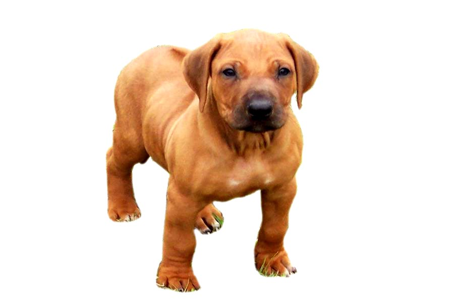 Dog Dog Bazar Part 4