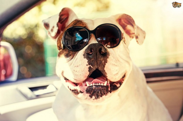 Get six essential Tips for keeping safe your dog from sunburn